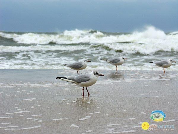 Oggi il #mare è un leggermente mosso a #Pineto in #Abruzzo www.pinetovacanza.it
