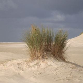 picture made on the island Texel