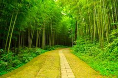 Forest Walking Path 1 - Download From Over 47 Million High Quality Stock Photos, Images, Vectors. Sign up for FREE today. Image: 134121