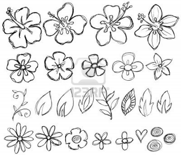 Sketcy Doodle Tropical Vector Elements Stock Photo