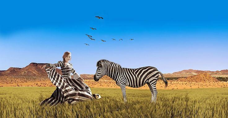 Top 20 Photos of Zebras