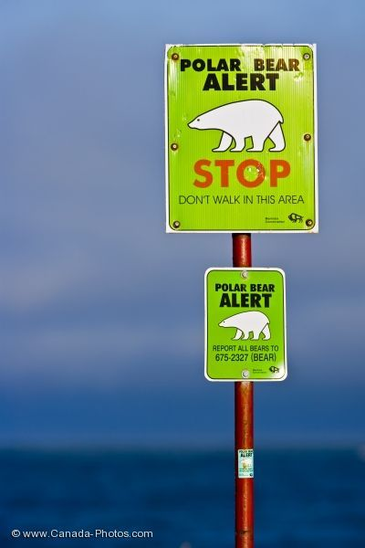 Polar bear warning sign at Hudson Bay, Manitoba, Canada. - The Hudson Bay area is popular for polar bear viewing, especially in the city of Churchill, where the bears come south in the course of their annual migrations.