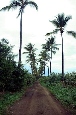 Palmiers, la Réunion