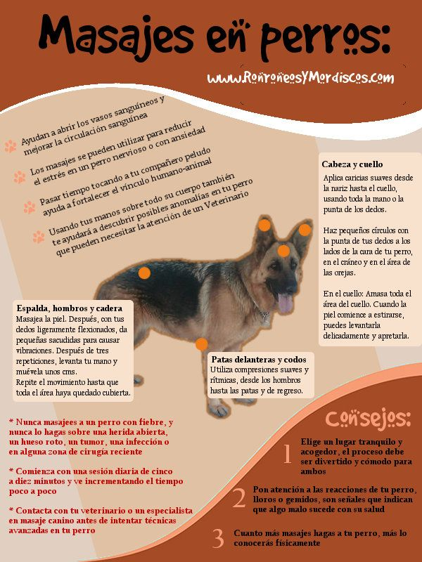 Masaje para perros                                                                                                                                                                                 Más