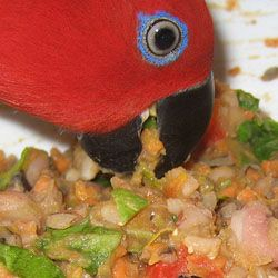 You want me to eat WHAT? Changing your bird from an all seed diet can be challenging and require a lot of patience but, ultimately, it is worth the effort. Birds are creatures of habit and can be suspicious of new foods. Unfortunately, change doesn't occur overnight for most birds. Your bird may to