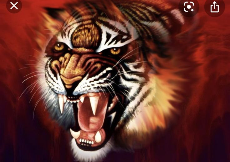 Pin Oleh Sam Bledsoe Di Creature Inspo Harimau Binatang Gambar