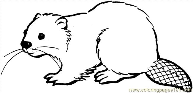 beaver drawings | ... printable coloring page Beaver 16 Coloring Page (Animals > Beaver