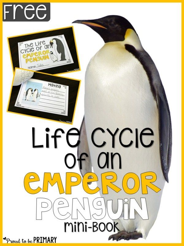 Free- Life Cycle of an Emperor Penguin: Mini Book. Penguin Activities for the Primary Classroom - Proud to be Primary