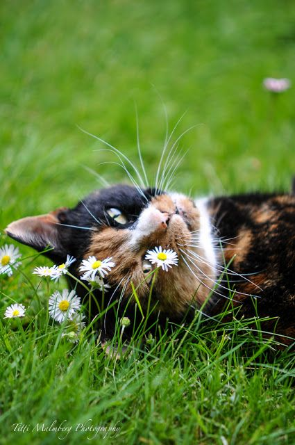 A beautiful cat relaxing in a meadow!                                                                                                                                                      More