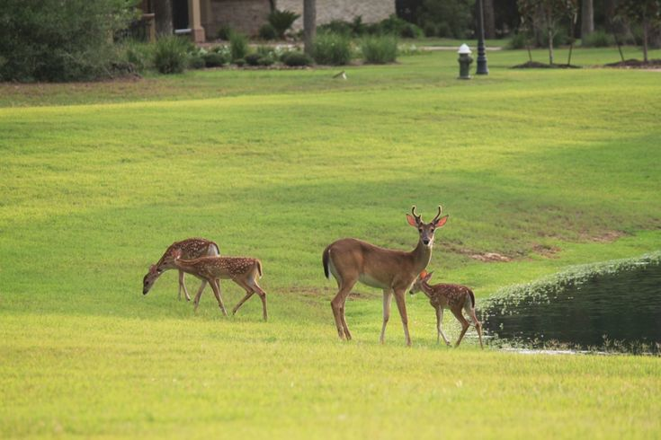 1000 images about the woodlands texas on pinterest