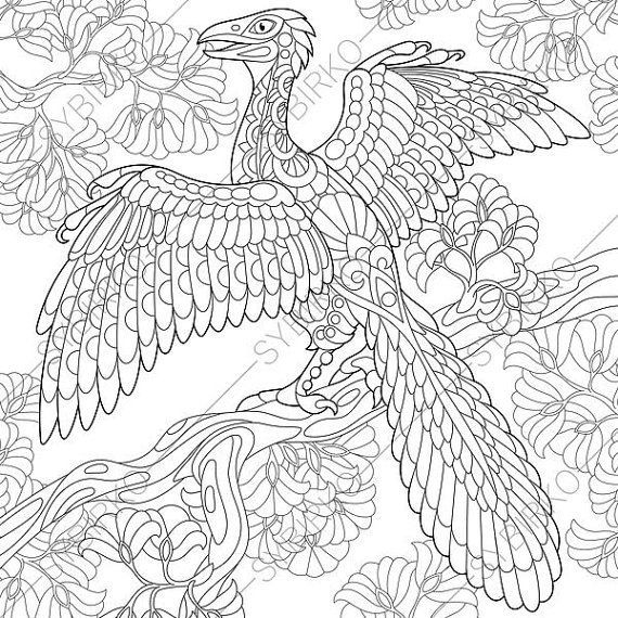 Dinosaur Archeopteryx Adult Coloring Page By Coloringpageexpress Rhpinterest: Dinosaur Bird Coloring Pages At Baymontmadison.com