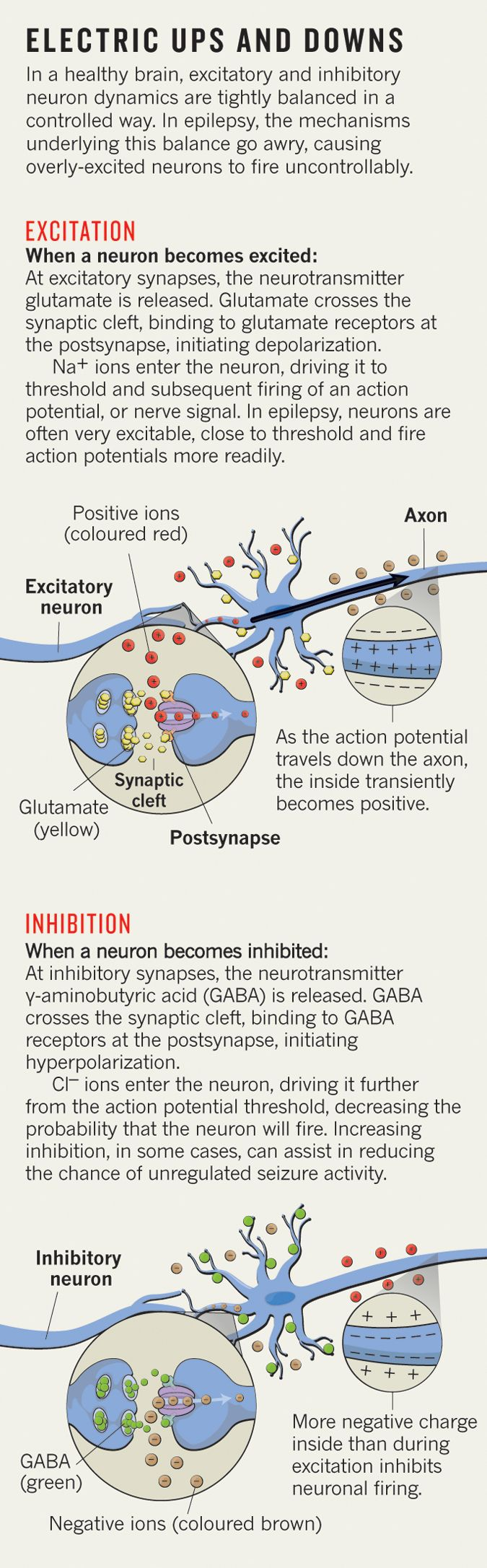 : Neurobiology: Unrestrained excitement : Nature : Nature Publishing Group