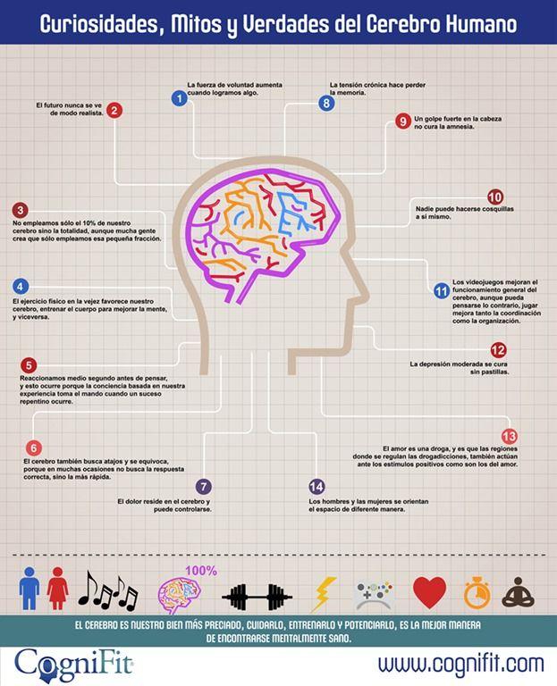 14 curiosidades sobre el cerebro humano
