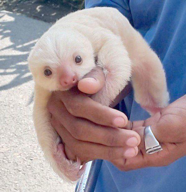 Cute Lil Baby Animals Cute Baby Animals Com Cute Baby Sloths