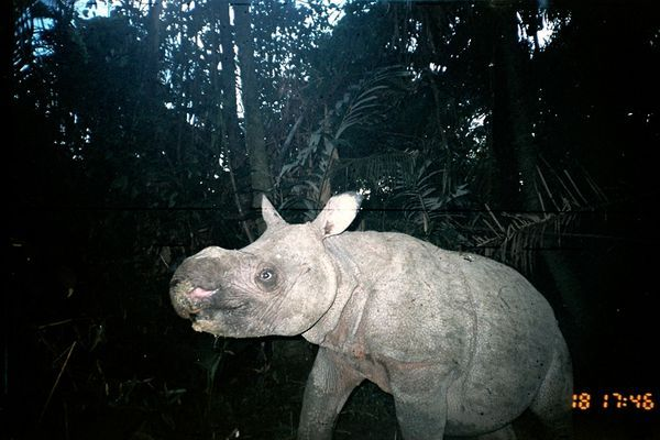 """rain and the rhinoceros essay Rain is the falling of water from the clouds coming back to the earth, which is taken indirectly by the sun  beautiful essay on """"a rainy day."""