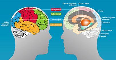 La mémoire permet d'enregistrer des informations venant d'expériences et d'événements divers, de les conserver et de les restit