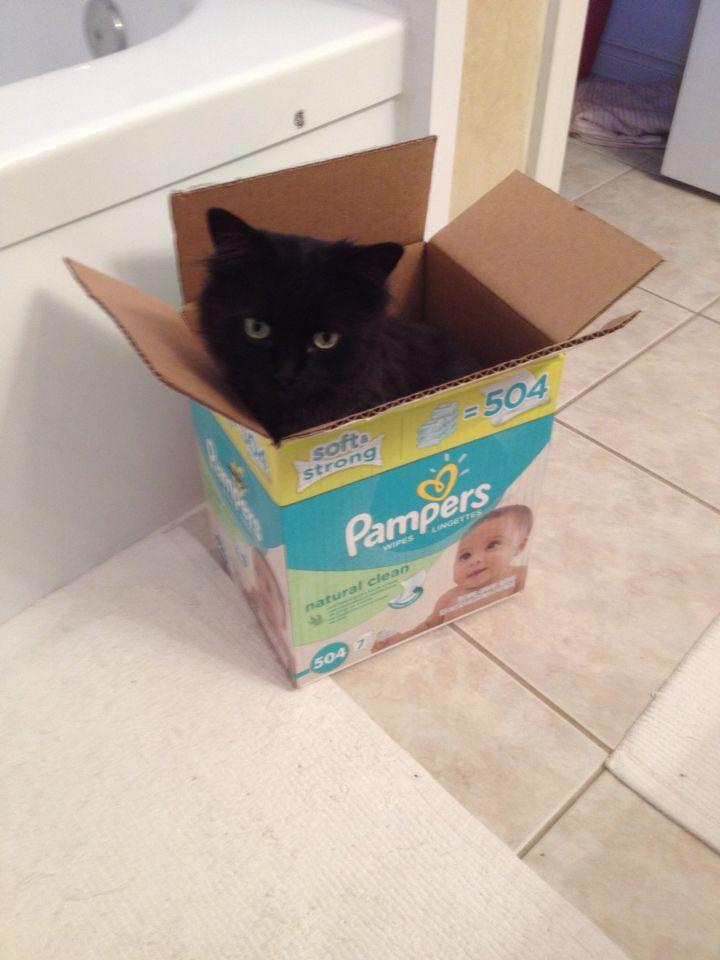 Georgie looooves boxes!