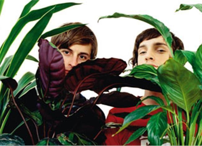 Φυτά εσωτερικού χώρου. «Φίλτρα» για τον αέρα του σπιτιού