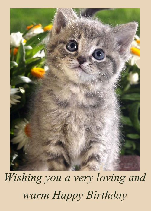 88 best cat birthday cards images on pinterest happy brithday just a cute little kitten in tall grass with daffodils find this pin and more on cat birthday cards bookmarktalkfo Images