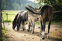 Natural boarding for your horse - ideas to make this a reality