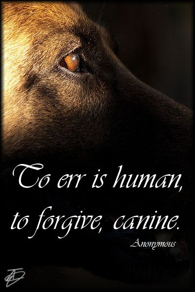 dog and human relationship facts quotes