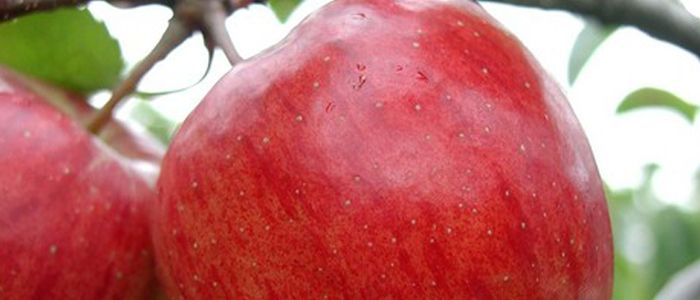 Washington Apple Health Benefit Facts