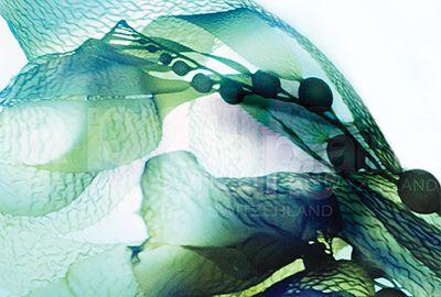 La Collection Biologie Marine Avancée La Prairie associe des nutriments marins et des antioxydants pour réveiller et renouveler les défenses naturelles de la peau