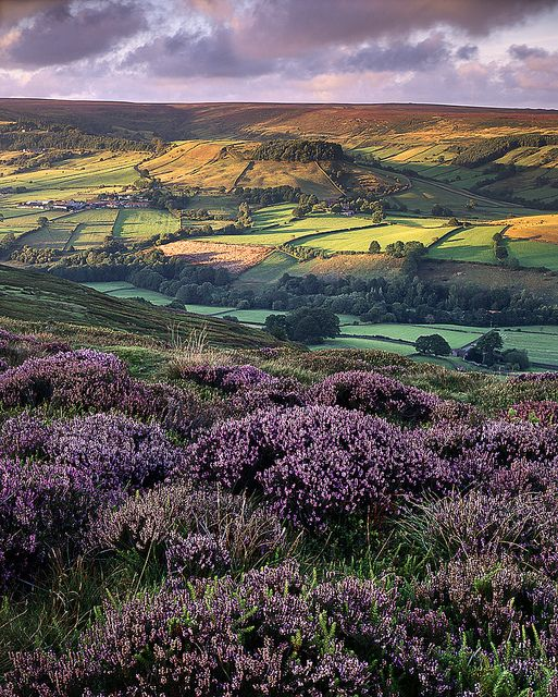 Rosedale, North Yorkshire, England. How can you not love the English countryside?