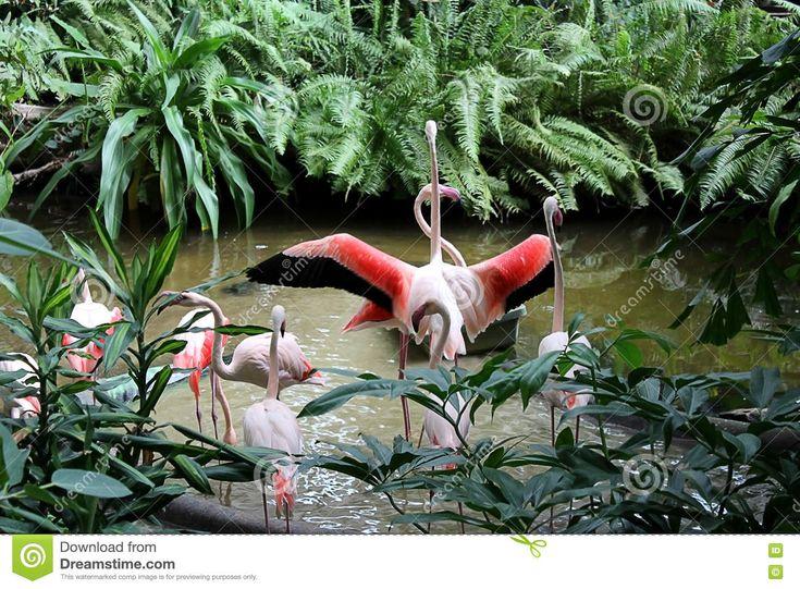 фламинго - Скачивайте Из Более Чем 57 Миллионов Стоковых Фото, Изображений и Иллюстраций высокого качества. изображение: 80099482