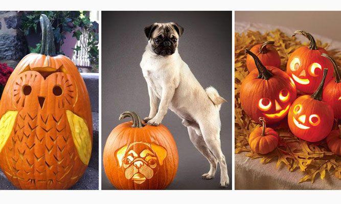 Äntligen dags för halloween! Så fixar du en läskig trädgård, borrar din pumpa och gör otäcka halloweendekorationer som skrämmer slag på dina gäster! Här är våra 10 mest populära halloweenartiklar med 57 kusliga tips!