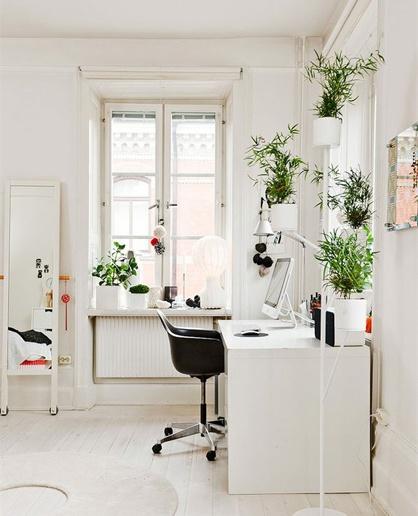 Feng Shui for din helse! Grønne planter i dit helbreds-område er et must – og kan nemt placeres de fleste steder i hjemmet, i vindueskarme, på møbler eller som gulvplanter.