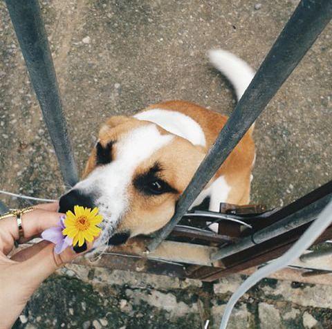 flor que não se cheira