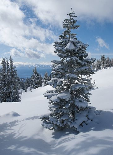 Lake Tahoe Winter Wallpaper Desktop Background: 555 Best Images About In A State Of Silver..........sands