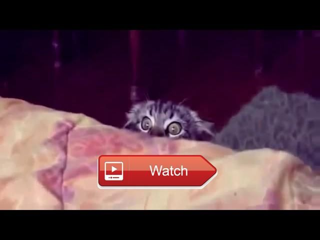 😸 Funny Cats and Dogs Videos Cute animals Videos Compilation Crazy Cat Videos 🐶 Top FUNNY animals Compilation Funny Cats and Dogs Videos…