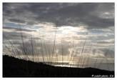 Bookphoto.re - Portfolio - Savane de Plateau Caillou