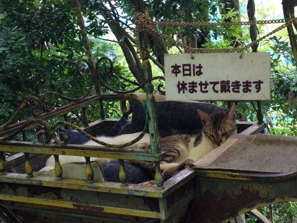 """なぜこんなに!京都の「哲学の道」が""""猫だらけ""""になっているらしい   RETRIP[リトリップ]"""