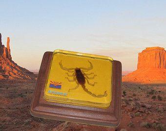 Arizona Sonora Desert Scorpion in resina di cristallo