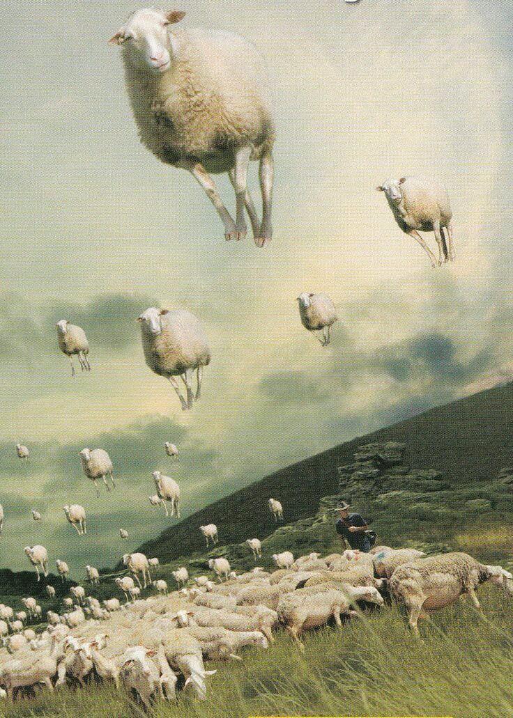 Count sheep to sleep