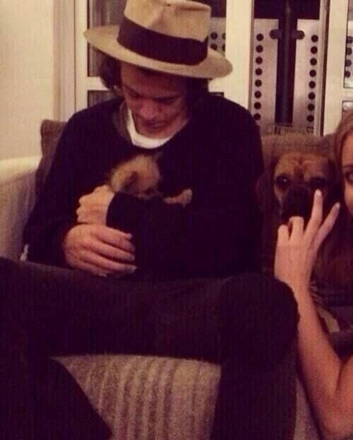 Tbh this is why i love harry all the drama of zouis smoking weed and here is harry with a puppy ♥ i hope he never changes and doesn't surprise us by doing that stuff bc it would be wayyy more heartbreaking he looks like the type of guy who wouldn't do that
