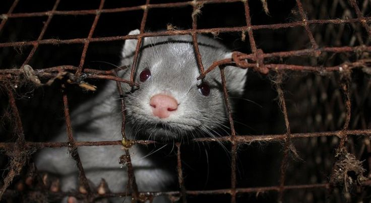 Harvey Nichols has gone back on its 2004 promise to not sell fur from fur farms or trapped animals.     Harvey Nichols says it requires any brand it sells in its stores to adhere to the fur trade's 'Origin Assured' scheme. This is a smokescreen.    Origin Assured's website describes membership of the...