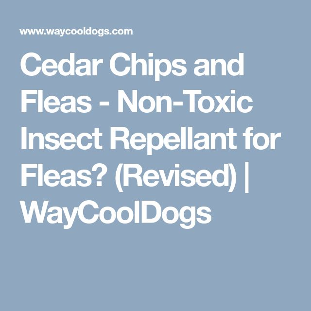 Cedar Chips and Fleas - Non-Toxic Insect Repellant for Fleas? (Revised) | WayCoolDogs