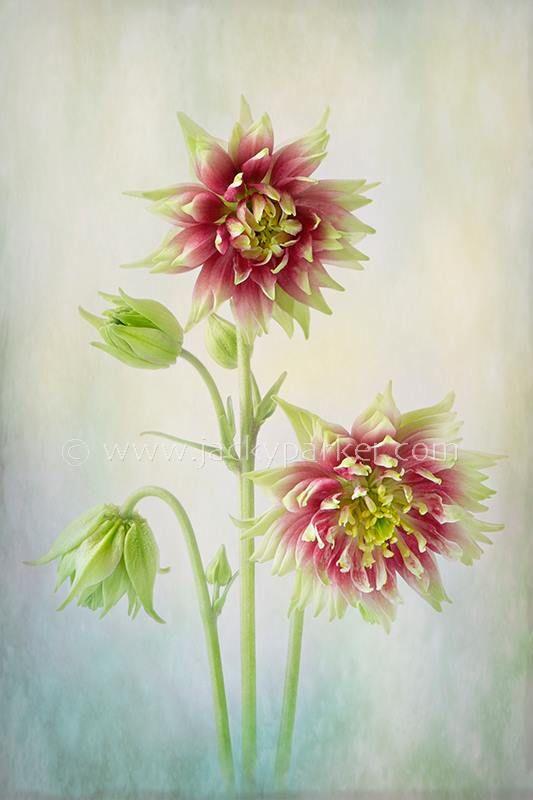 Jacky Parker Floral Art