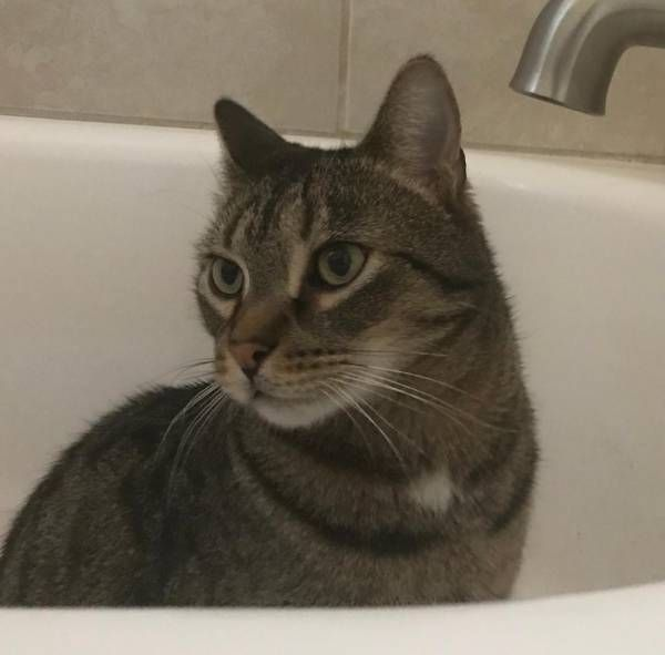Lost Cat Reserve Township, Pennsylvania, PA, United States