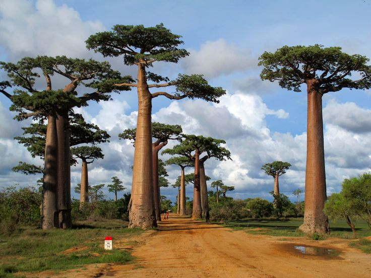 22 best Mahajanga images on Pinterest Madagascar, Canoeing and Kayaks