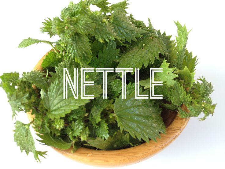 nettle title