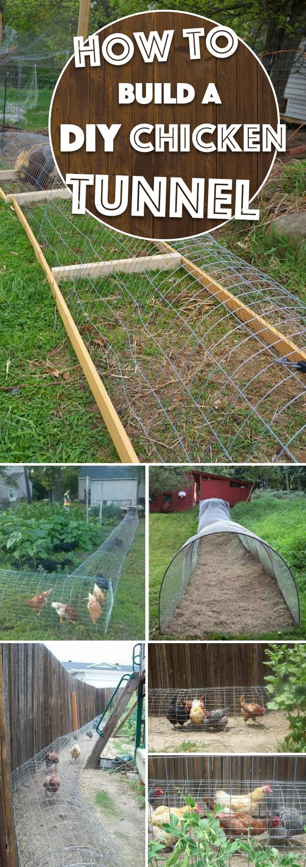 A DIY Chicken Tunnel Can Let You Watch the Birds Roam Freely WIthout Destroying the Garden Flower Beds!