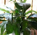 How to Prune Houseplants: 8 Steps (with Pictures) - wikiHow