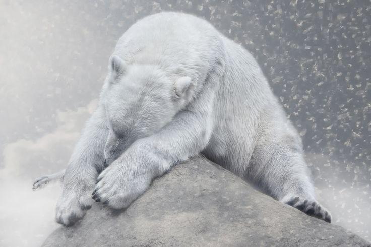 Not dreaming of white Christmas by Joachim G.  Pinkawa