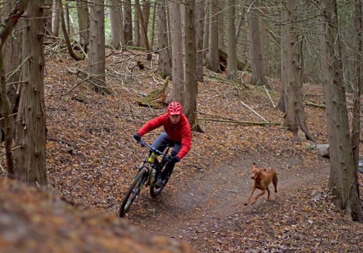 5 Tips For Training A Mountain Bike Trail Dog!  #mountainbiking