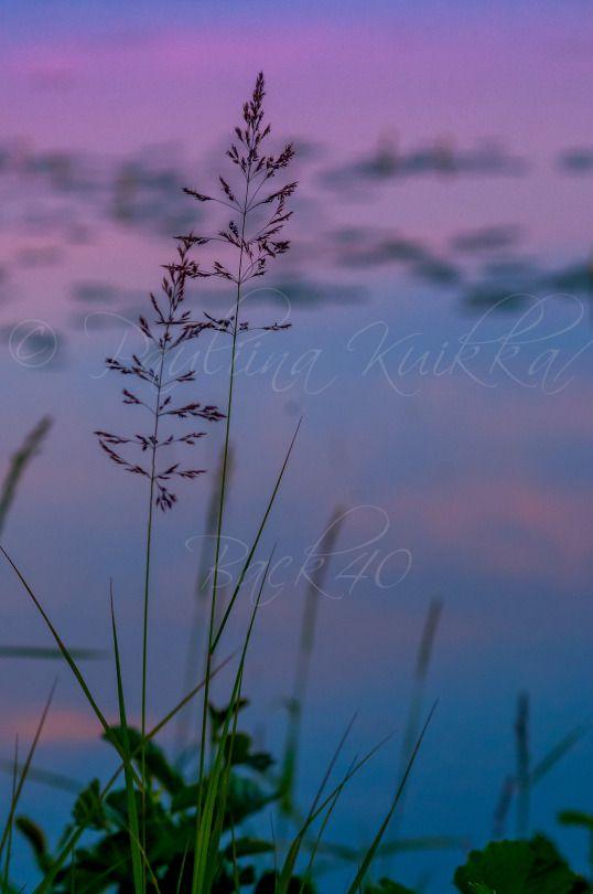 Blue Moment at Viinijärvi in summer 2014 - Sininen hetki Viinijärven rannalla kesällä 2014